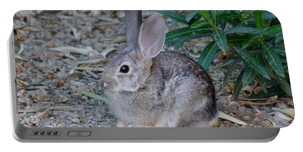 Mary Deal Portable Battery Charger featuring the photograph Desert Cottontail by Mary Deal