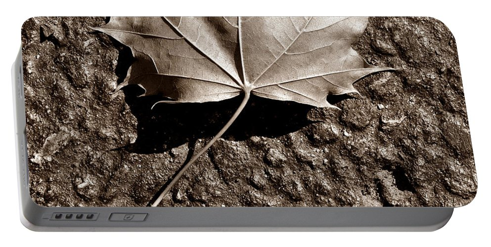 Autumn Portable Battery Charger featuring the photograph Dipped In Bronze by Luke Moore