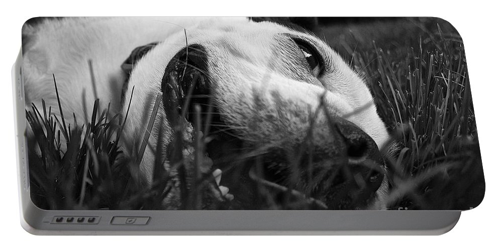 Animal Portable Battery Charger featuring the photograph Dog Days Of Summer by Susan Herber