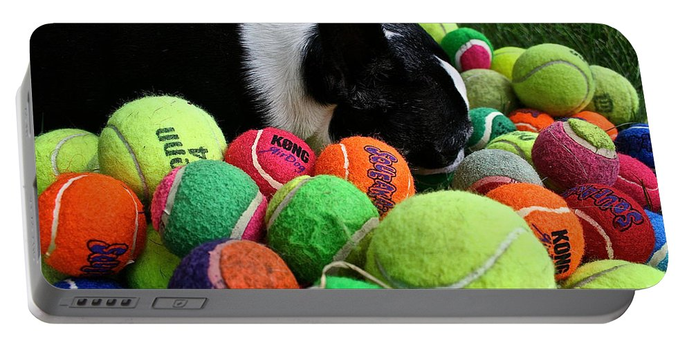 Mammal Portable Battery Charger featuring the photograph Dog Dreams by Susan Herber