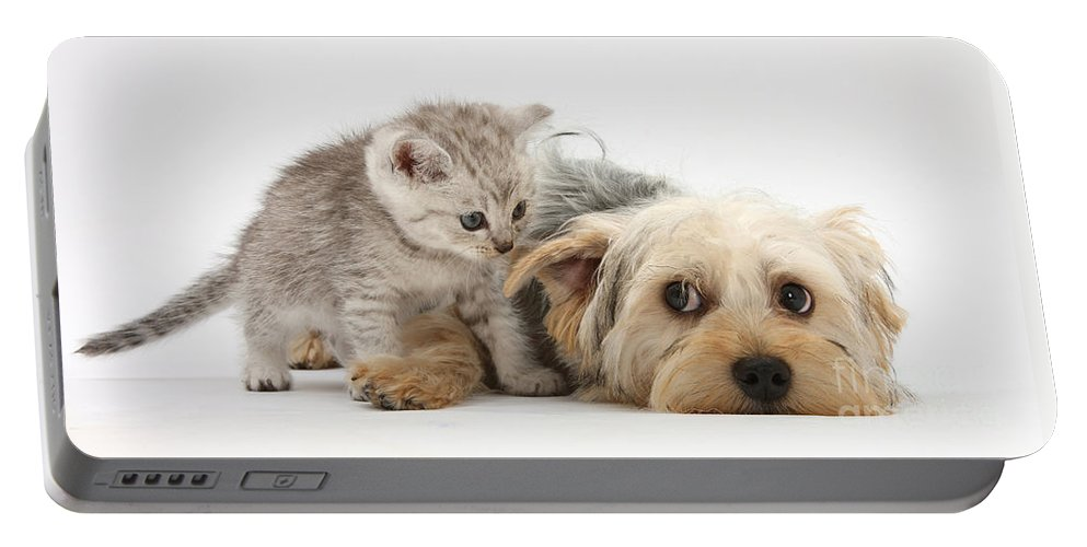 Dog Portable Battery Charger featuring the photograph Dog Surrendering To Kitten by Mark Taylor