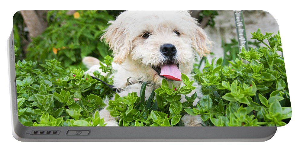Animal Portable Battery Charger featuring the photograph dog by Tom Gowanlock