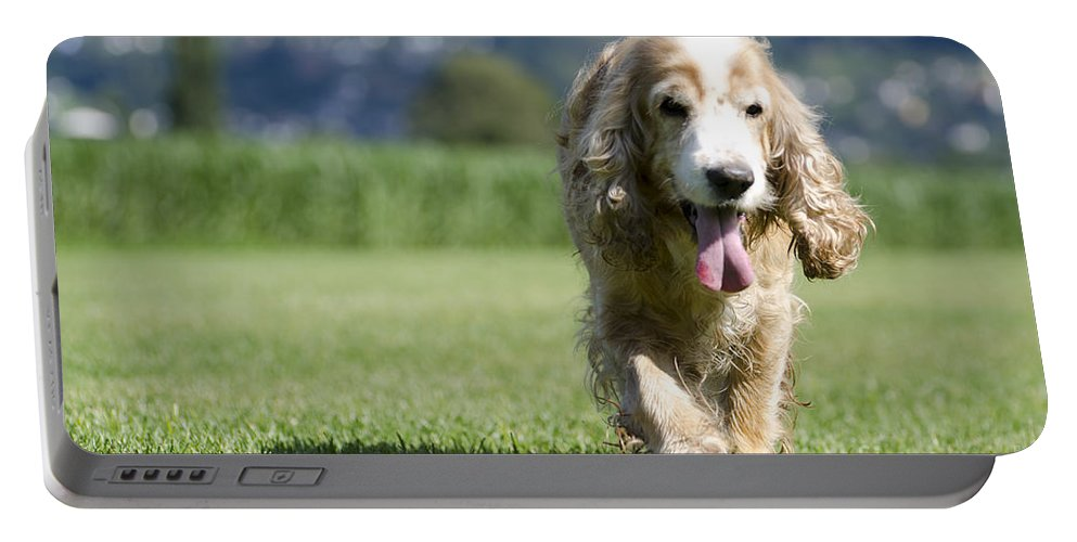Dog Portable Battery Charger featuring the photograph Dog Walking On The Green Grass by Mats Silvan