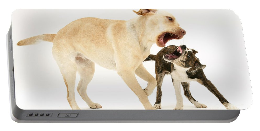 Animal Portable Battery Charger featuring the photograph Dogs Playing by Mark Taylor