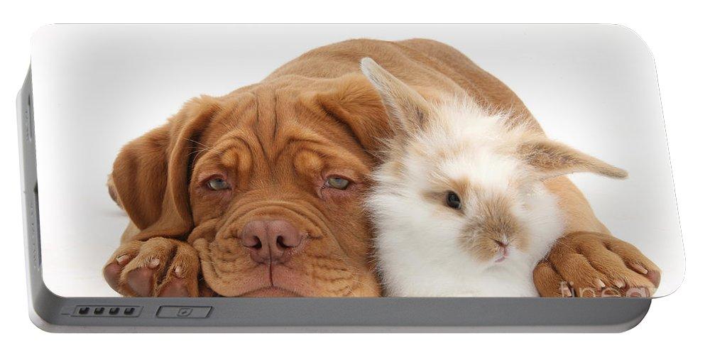 Dogue De Bordeaux Portable Battery Charger featuring the photograph Dogue De Bordeaux Puppy With Bunny by Mark Taylor
