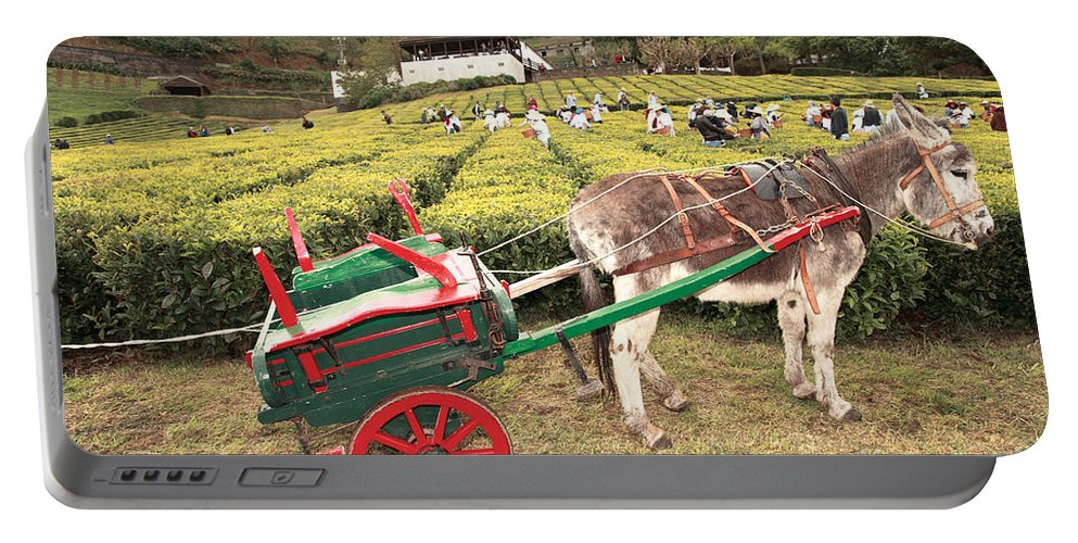 Rural Portable Battery Charger featuring the photograph Donkey And Tea Gardens by Gaspar Avila