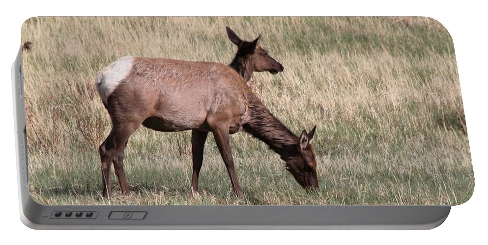 Elk Portable Battery Charger featuring the photograph Double Vision by Dana Bechler