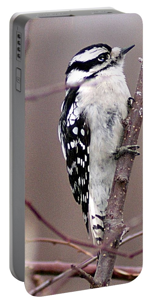 Downy Portable Battery Charger featuring the photograph Downy Woodpecker 3 by Joe Faherty