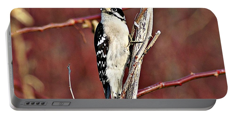 Downy Woodpecker Portable Battery Charger featuring the photograph Downy Woodpecker 6 by Joe Faherty
