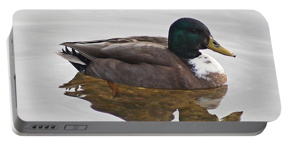 Duck Portable Battery Charger featuring the photograph Duck 3 by Joe Faherty