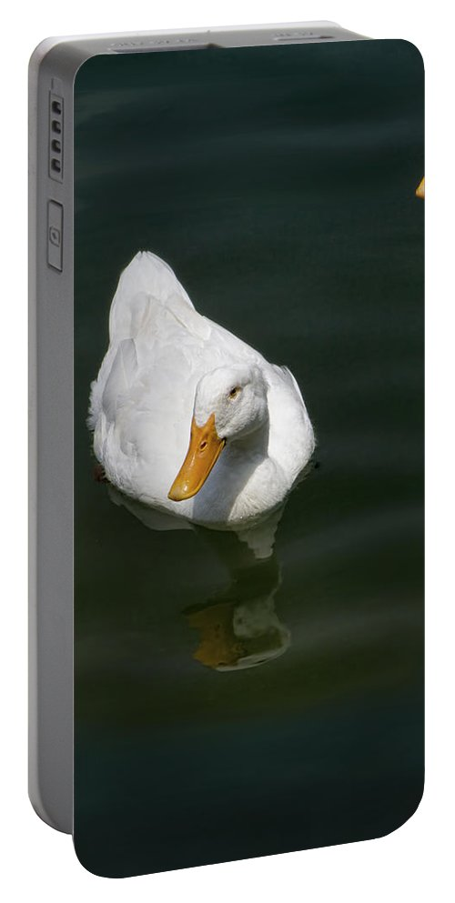 Anas Platyrhynchos Domestica Portable Battery Charger featuring the photograph Ducking In by Kathy Clark