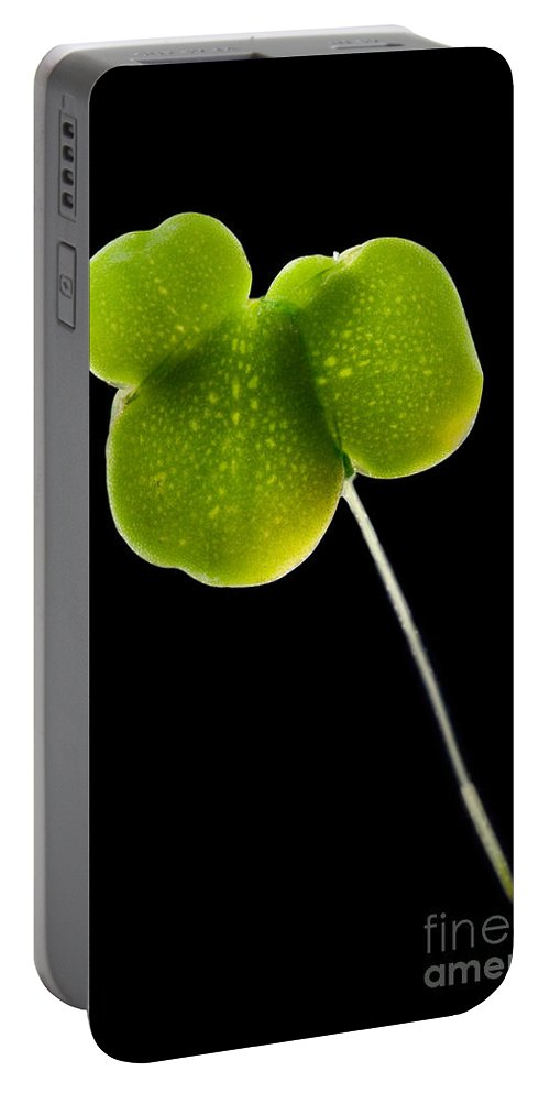 Plant Portable Battery Charger featuring the photograph Duckweed Lemna Minor by Raul Gonzalez Perez