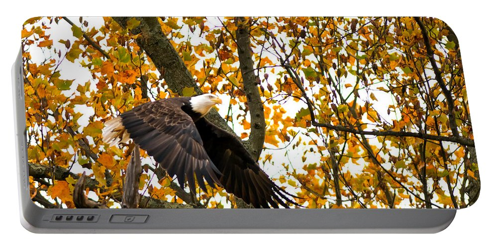 Eagle Portable Battery Charger featuring the photograph Eagle In Autumn by Randall Branham