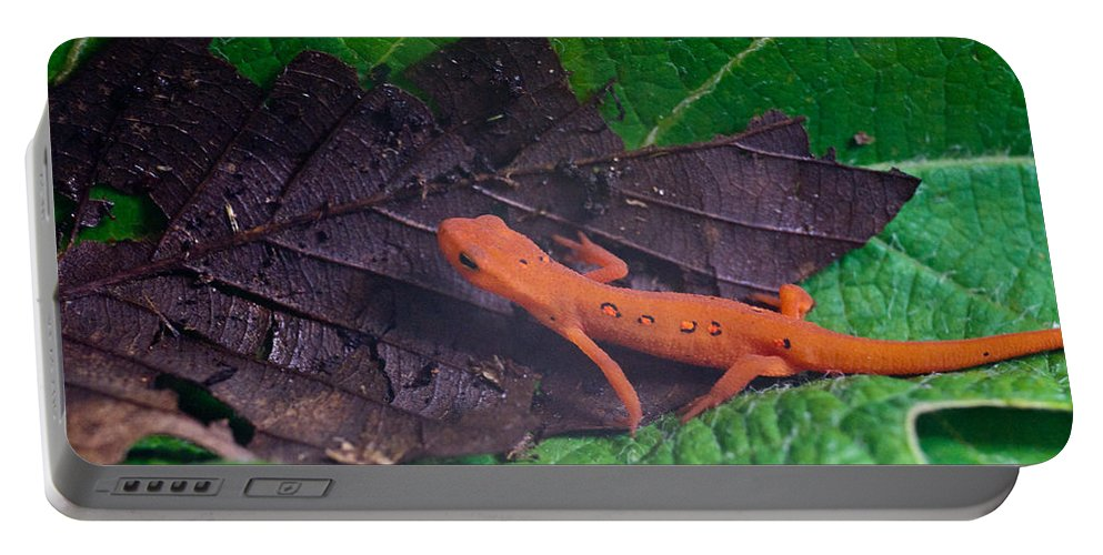 Eastern Portable Battery Charger featuring the photograph Easterm Newt Nnotophthalmus Viridescens 12 by Douglas Barnett