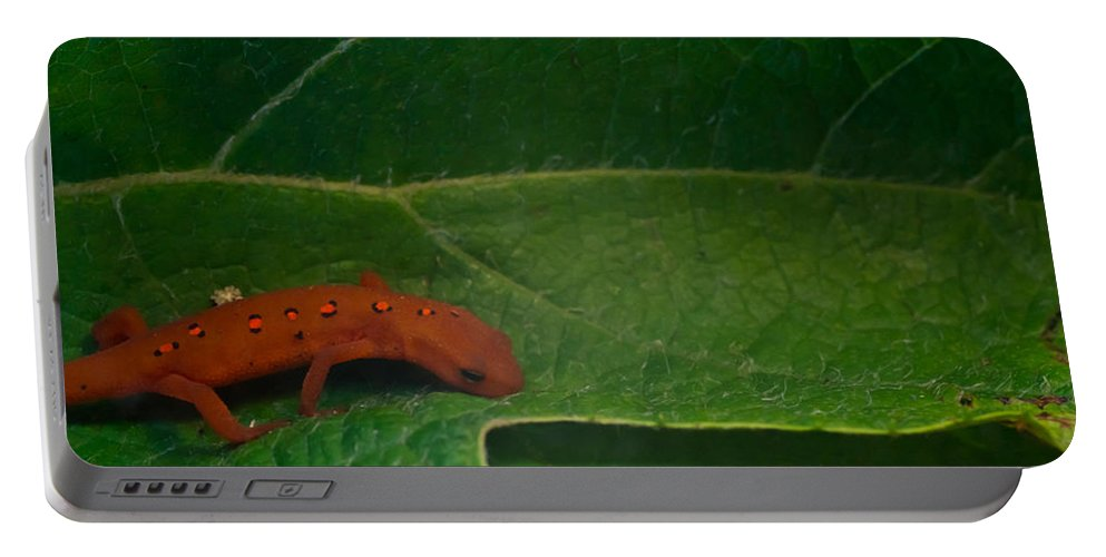 Eastern Portable Battery Charger featuring the photograph Easterm Newt Nnotophthalmus Viridescens 17 by Douglas Barnett