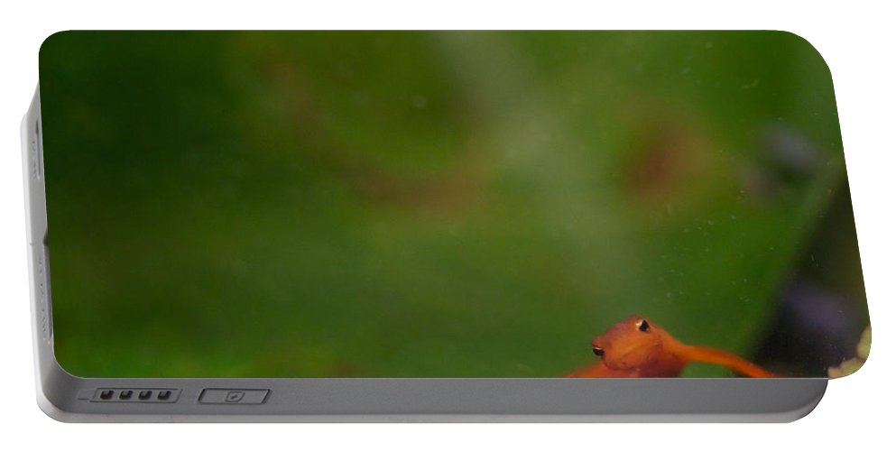 Eastern Portable Battery Charger featuring the photograph Easterm Newt Nnotophthalmus Viridescens 18 by Douglas Barnett