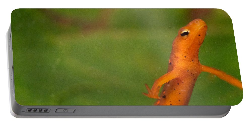 Eastern Portable Battery Charger featuring the photograph Easterm Newt Nnotophthalmus Viridescens 20 by Douglas Barnett