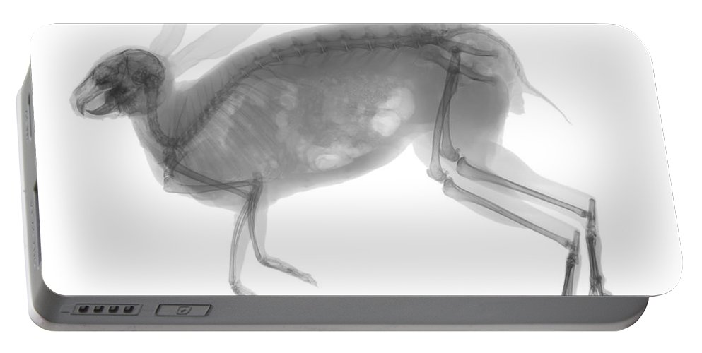 X-ray Portable Battery Charger featuring the photograph Eastern Cottontail Rabbit by Ted Kinsman