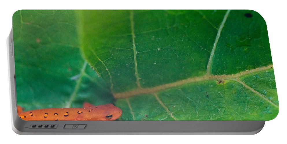 Eastern Portable Battery Charger featuring the photograph Eastern Newt Notophthalmus Viridescens 28 by Douglas Barnett