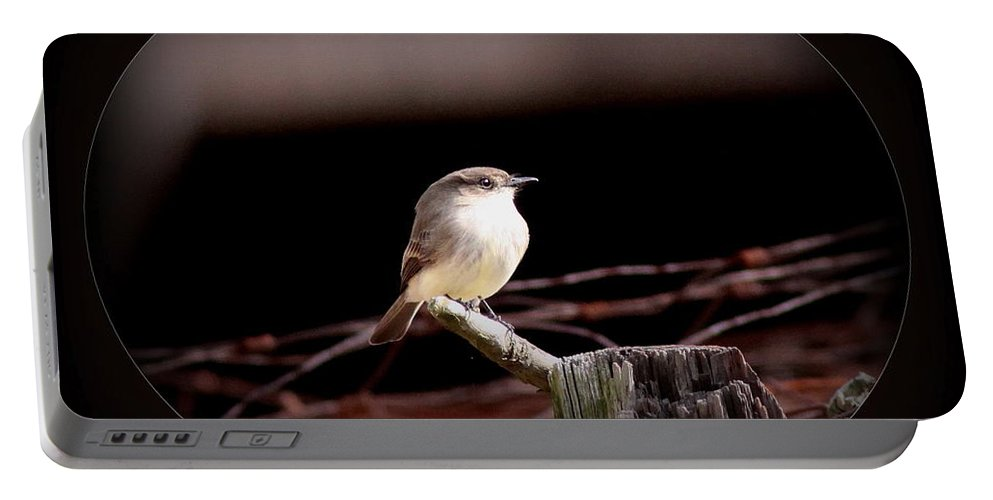 Eastern Phoebe Portable Battery Charger featuring the photograph Eastern Phoebe - Sayornis Phoebe by Travis Truelove