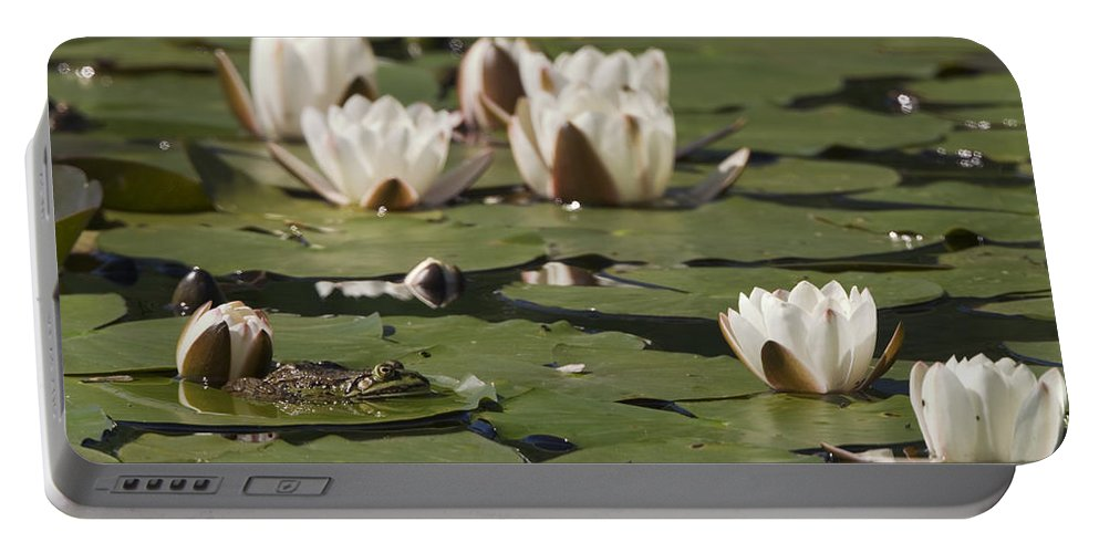 Mp Portable Battery Charger featuring the photograph Edible Frog Rana Esculenta On Water by Konrad Wothe