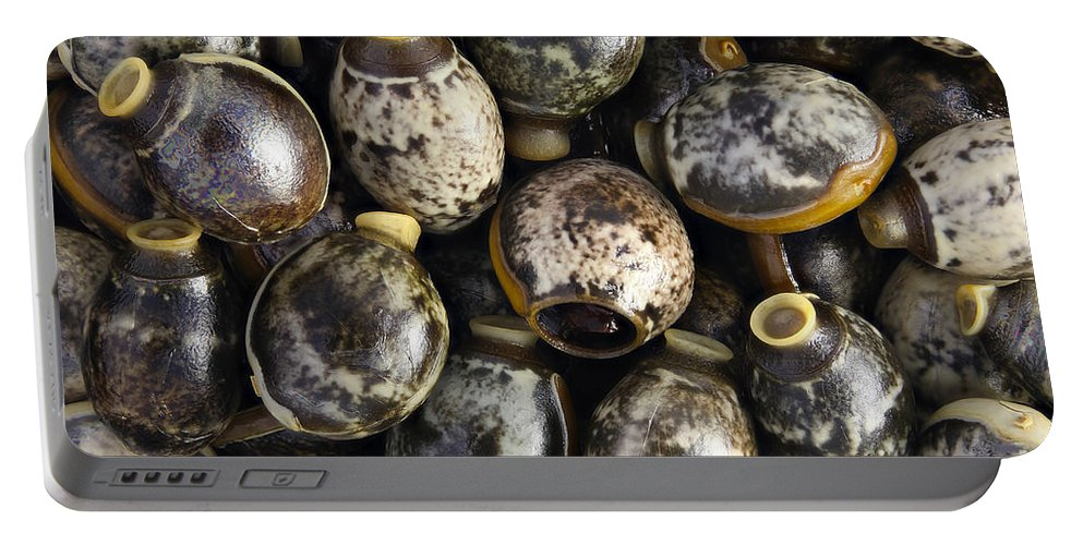 Eggs Portable Battery Charger featuring the photograph Eggs Of Stick Insect by M. I. Walker