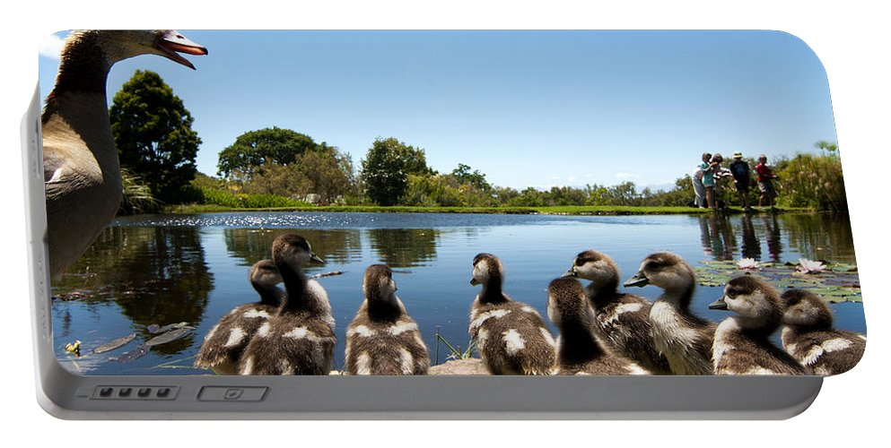 Kirstenbosch Portable Battery Charger featuring the photograph Egyptian Geese by Fabrizio Troiani