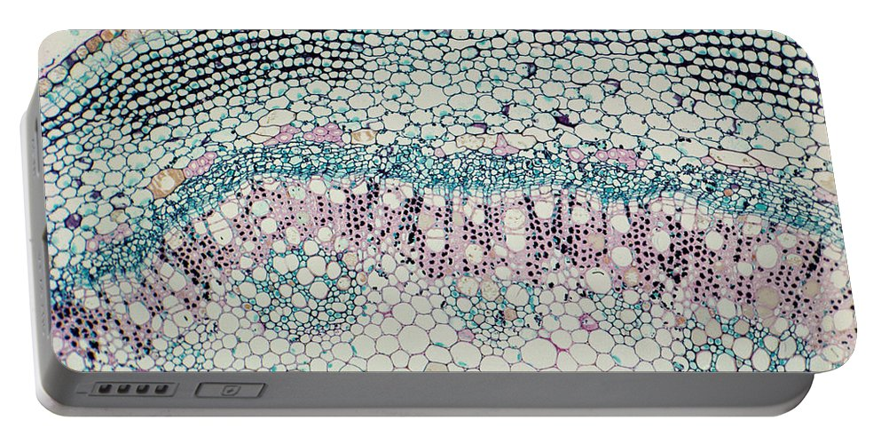 Transverse Section Portable Battery Charger featuring the photograph Elder Tree Stem by M. I. Walker