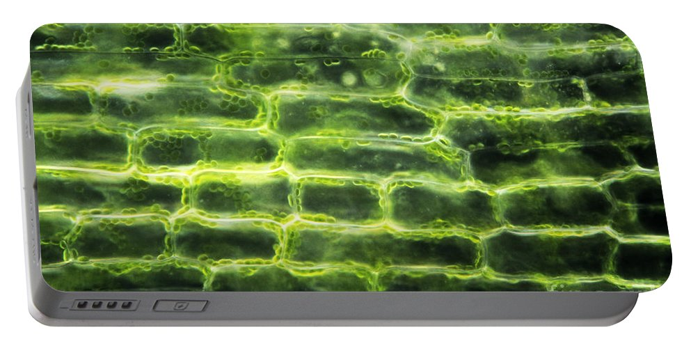 Elodea Portable Battery Charger featuring the photograph Elodea Leaf by M. I. Walker