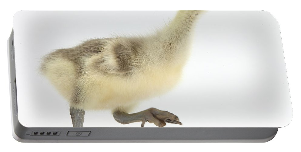 Nature Portable Battery Charger featuring the photograph Embden X Greylag Gosling Running by Mark Taylor