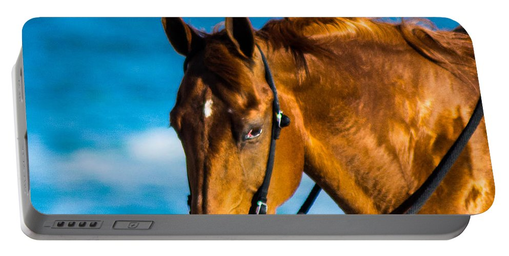 Portable Battery Charger featuring the photograph Enjoying The Breeze by Shannon Harrington