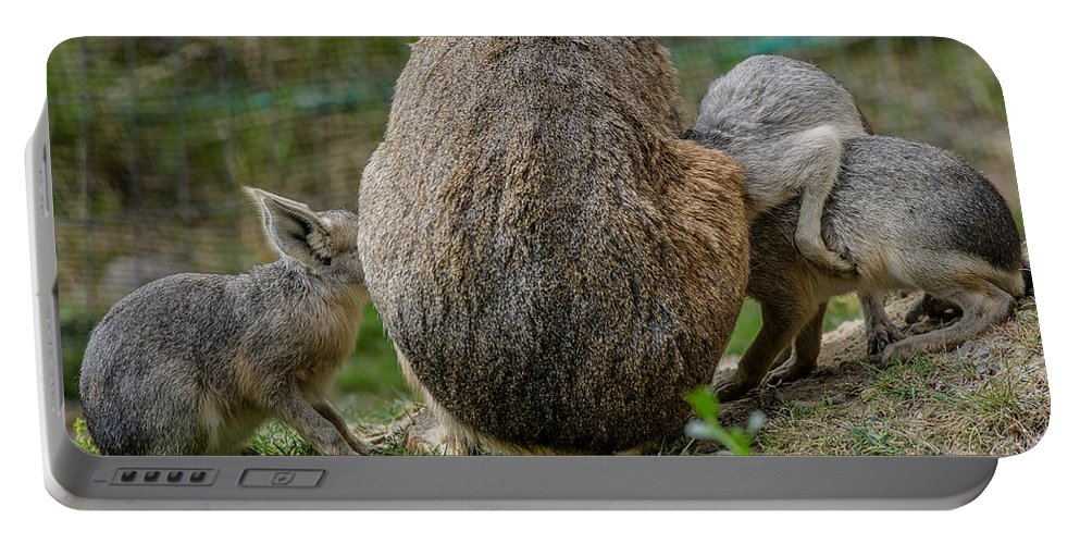 Rodent Portable Battery Charger featuring the photograph Enough For Everyone by Greg Nyquist