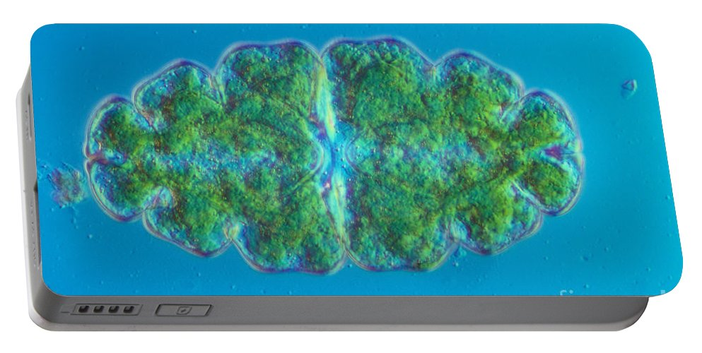 Science Portable Battery Charger featuring the photograph Euastrum Sp. Algae Lm by M. I. Walker