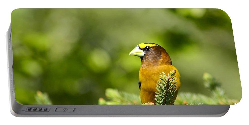 Bird Portable Battery Charger featuring the photograph Evening Grosbeak by Teresa Zieba