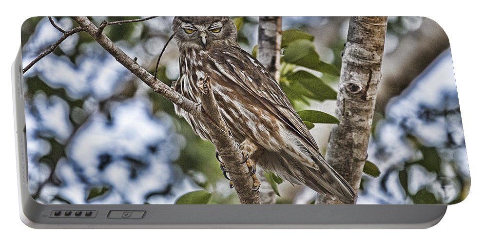 Barking Owl Portable Battery Charger featuring the photograph Eyes Wide Shut V4 by Douglas Barnard
