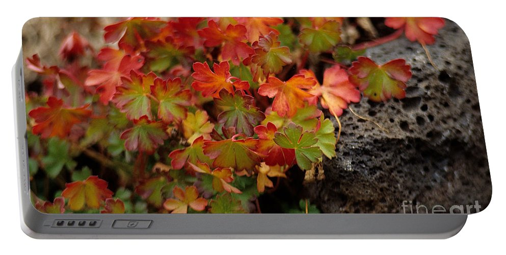 Fall Portable Battery Charger featuring the photograph Fall Brilliance by Sharon Elliott