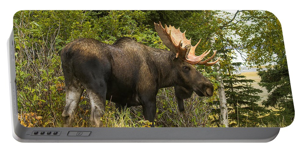 Alaska Portable Battery Charger featuring the photograph Fall Bull Moose by Doug Lloyd