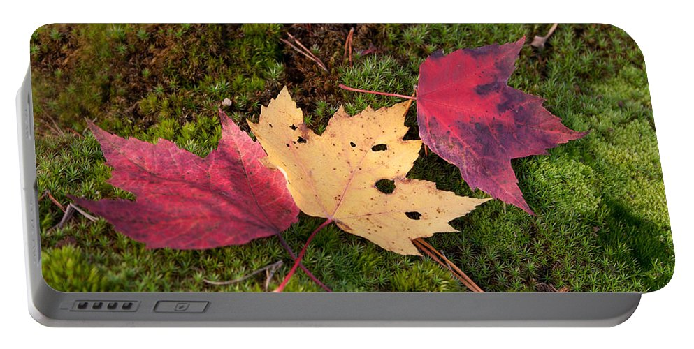 Fall Portable Battery Charger featuring the photograph Fall Colors by David Troxel