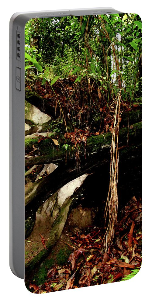 Old Trees Portable Battery Charger featuring the photograph Fallen by Karen Elzinga