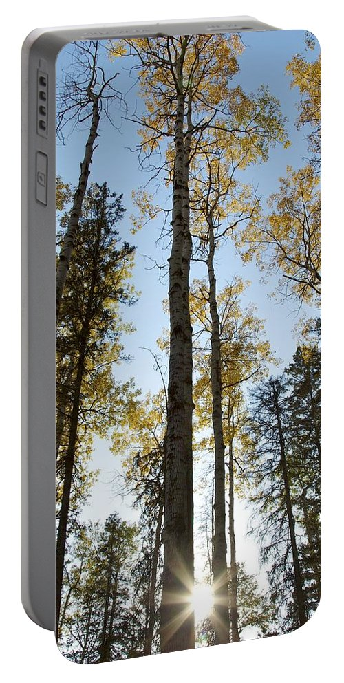 Fall Leaves Portable Battery Charger featuring the photograph Falling Sunlight Fort Mcmurray by Alanna DPhoto