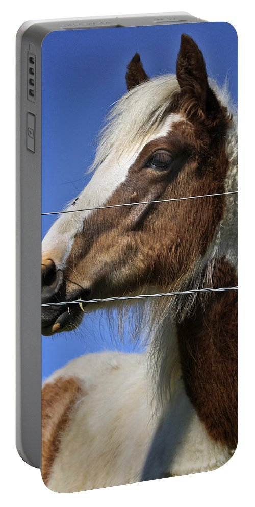 Animal Portable Battery Charger featuring the photograph Feed Me by Joan Carroll