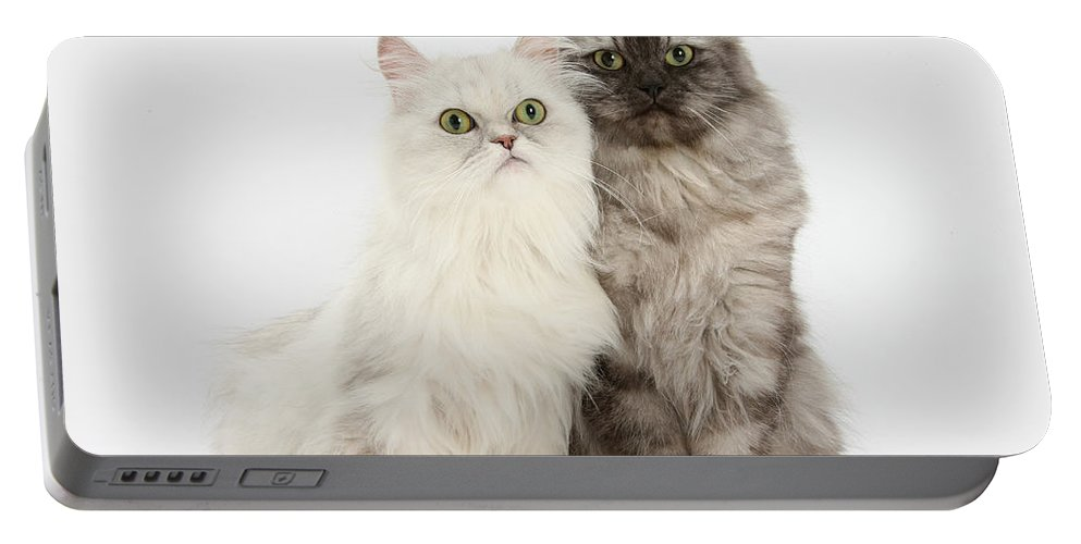 Nature Portable Battery Charger featuring the photograph Female Cats by Mark Taylor