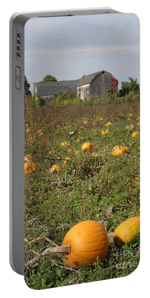 Pumpkin Portable Battery Charger featuring the photograph Field Of Pumpkins by Ted Kinsman