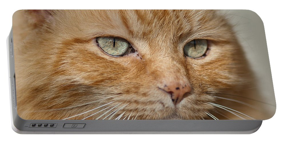 Cat Portable Battery Charger featuring the photograph Fierce Warrior Kitty by Greg Nyquist