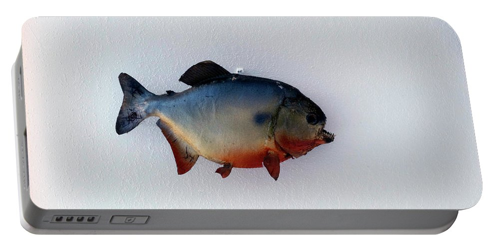 Animals Portable Battery Charger featuring the photograph Fish Mount Set 12 A by Thomas Woolworth