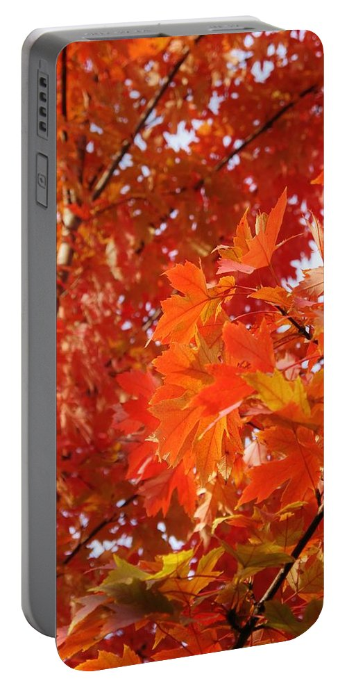 Maple Portable Battery Charger featuring the photograph Flaming Maples by Ian MacDonald
