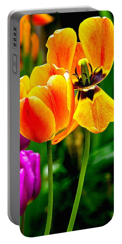 Portable Battery Charger featuring the photograph Flower 19 by Burney Lieberman