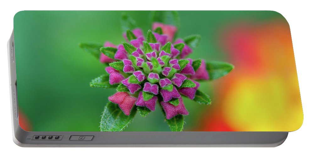 Purple Portable Battery Charger featuring the photograph Flower Pop by Pam Fong