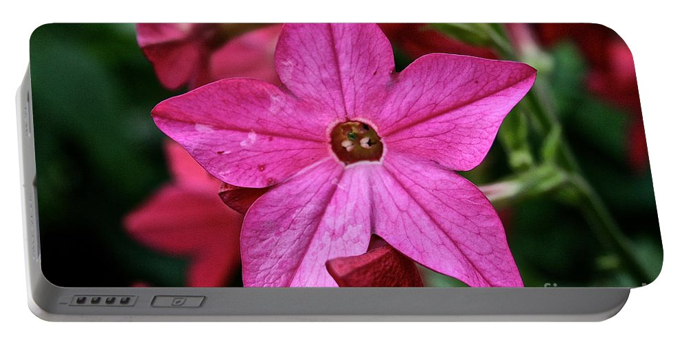 Floral Portable Battery Charger featuring the photograph Flowering Tobacco by Susan Herber