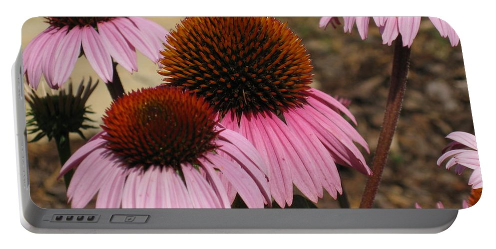Coneflowers Portable Battery Charger featuring the photograph Coneflowers by Megan Cohen